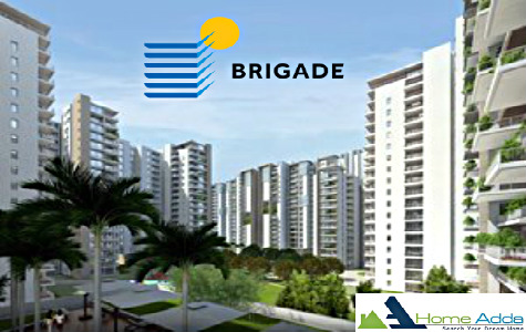 Brigade Begonia