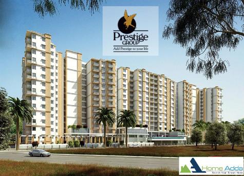 Prestige Pinewood